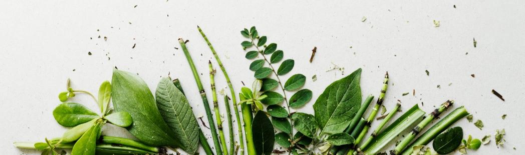 Plantas, flores y hierbas para cosmética casera